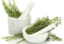 plantas para el cuidado capilar